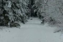 Sportliche-Wanderung-Fuchs